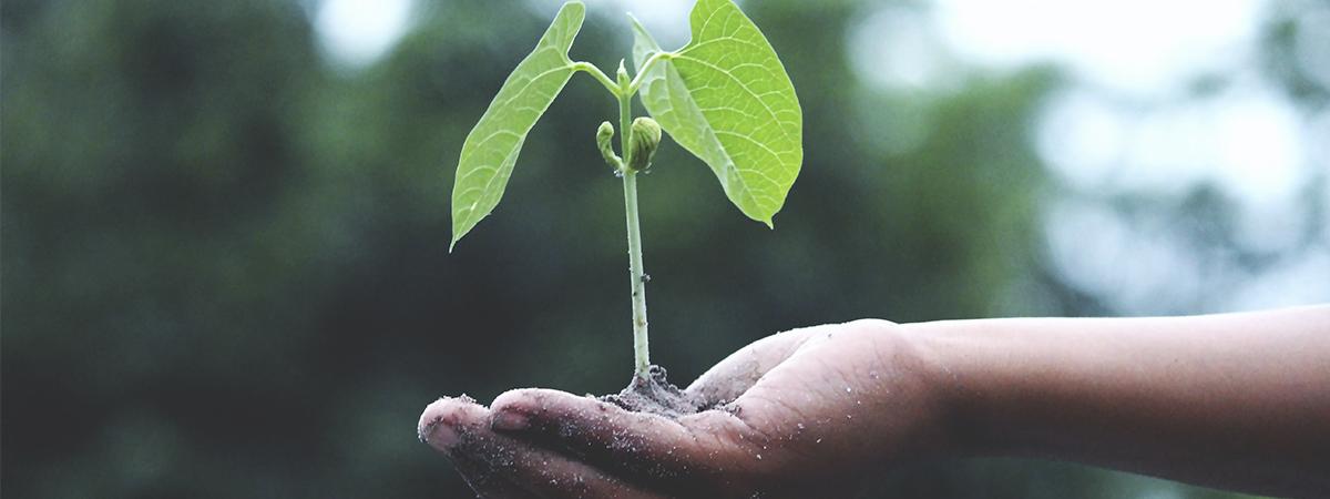 thumb cabecera Taller sobre sostenibilidad empresarial