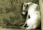 Foto Formación sobre bienestar y protección animal